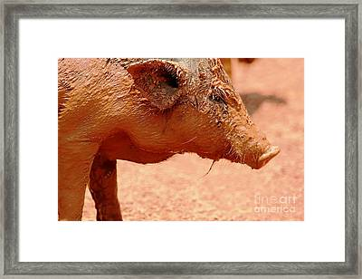 Framed Print featuring the photograph Mud Bath And A Facial by Nola Lee Kelsey