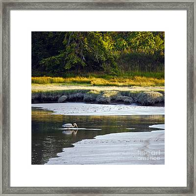 Mud Bay Heron 1 Framed Print