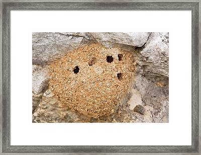 Mud Bee Nest Framed Print by Bob Gibbons