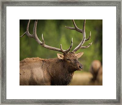 Mud Covered Antlers On A Rocky Mountain Framed Print