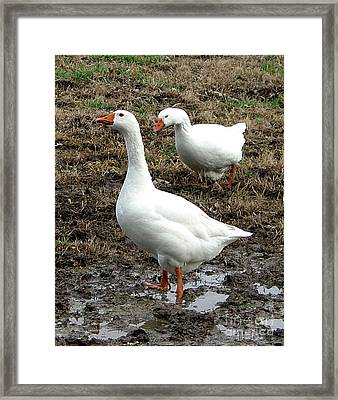 Mud Waddle Framed Print by Lesa Fine