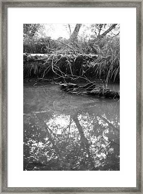 Framed Print featuring the photograph Muddy Creek by Adria Trail
