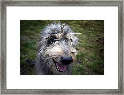 Muddy Dog Framed Print