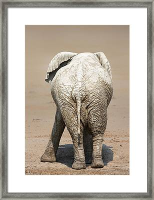 Muddy Elephant With Funny Stance  Framed Print by Johan Swanepoel