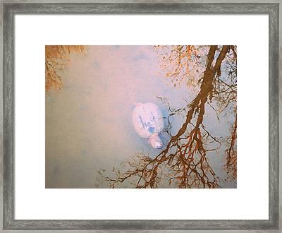 Muddy Spring Turtle Framed Print by Patricia Januszkiewicz