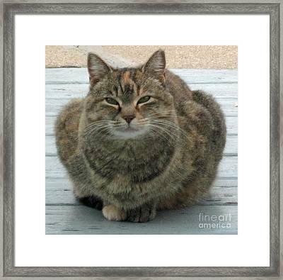 Muffin The Feral Cat Framed Print