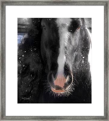 Mug Shot Framed Print by Fran J Scott