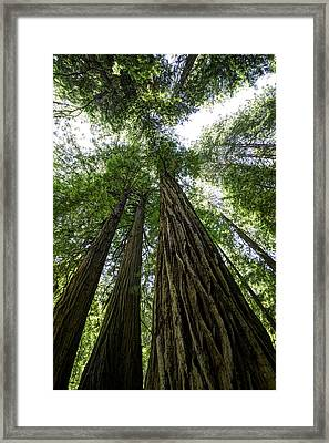Muir Woods I Framed Print