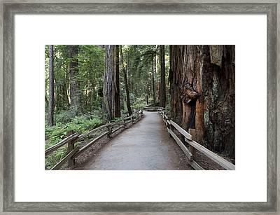 Muir Woods National Park Service Framed Print