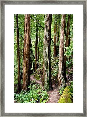 Muir Woods Framed Print by Niels Nielsen