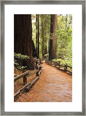 Muir Woods Trail Framed Print