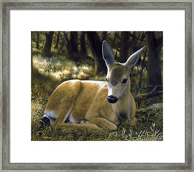 Mule Deer Fawn - A Quiet Place Framed Print