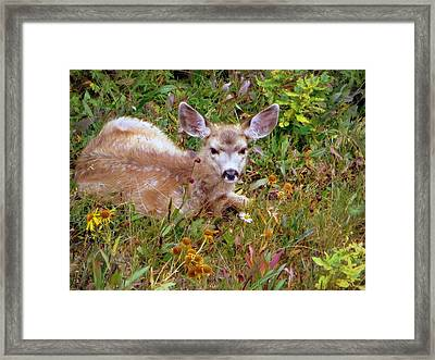 Framed Print featuring the photograph Mule Deer Fawn by Karen Shackles
