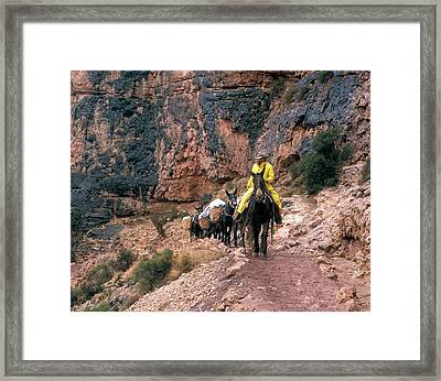 Mules Hauling Rubbish In The Grand Canyon Framed Print by Jim West