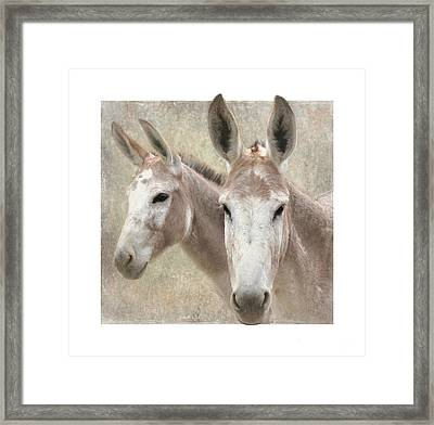 Mules Of A Different Color Framed Print
