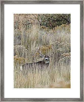 Mulie  Framed Print