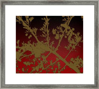 Mullberry Bush Framed Print