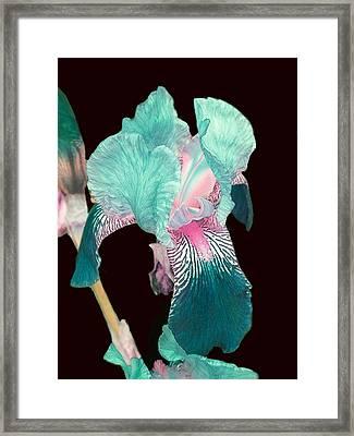 Multi-colored Flower Framed Print