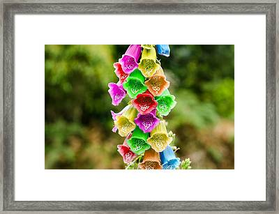 Multi Colored Flowers Framed Print
