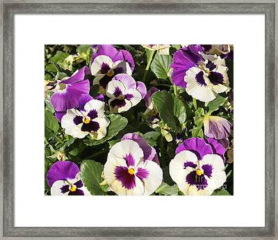 Multi Colored Flowers Framed Print by Kenny Bosak