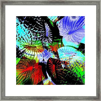 Multi Hosta Framed Print by Stephanie Aarons