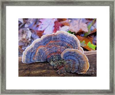 Multicolor Mushroom Framed Print