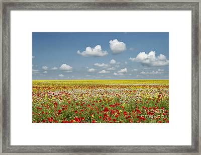 Multicoloured Field Framed Print by Tim Gainey