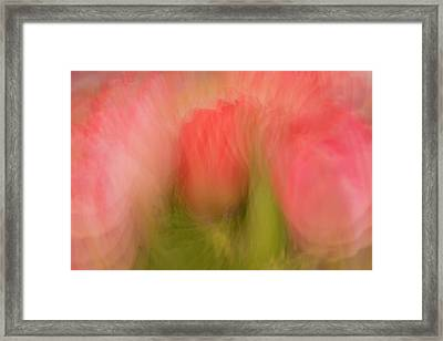 Multiple-exposure Of Bouquet Of Pink Framed Print by Rona Schwarz