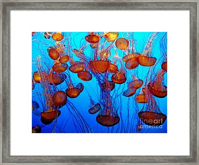 Multiple Jellyfish  Framed Print by Jim Fitzpatrick