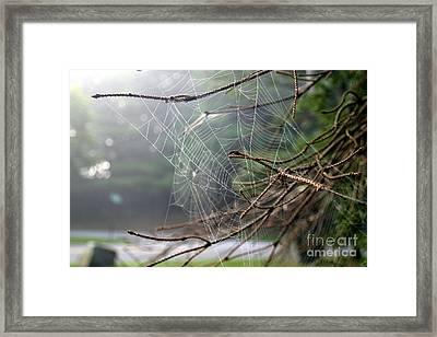 Multiple Webs - Near Framed Print by Kenny Glotfelty