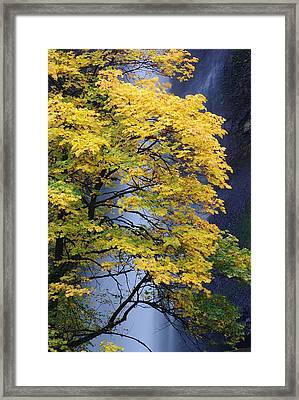 Multnomah Falls Maple Framed Print by Ken Dietz