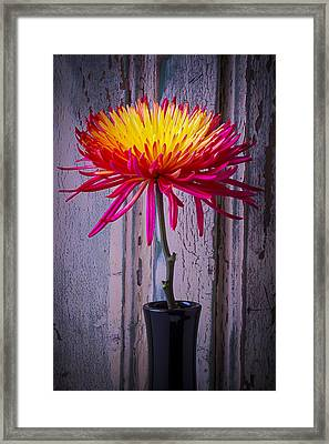 Mum Against Old Wall Framed Print by Garry Gay