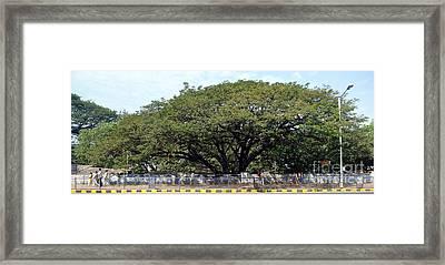 Mumbai India Framed Print by Sophie Vigneault