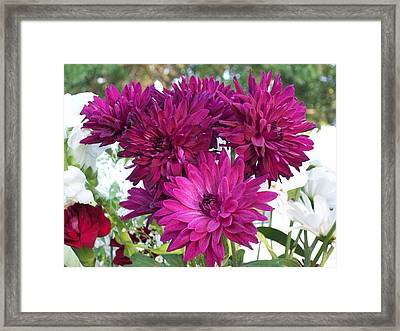 Framed Print featuring the photograph Mums In The House by Belinda Lee