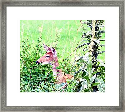 Munching On Leaves Framed Print