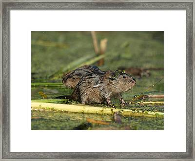 Framed Print featuring the photograph Munchkins by James Peterson