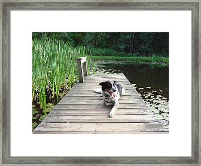 Framed Print featuring the photograph Mundee On The Dock by Michael Porchik