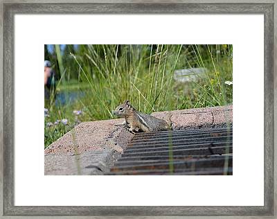 Munkmunk Framed Print by Amanda Griffiths