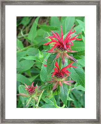 Muppet Flowers Framed Print