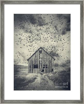 Murder Of Crows Framed Print by Edward Fielding