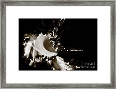 Murex Shell - Sepia Tone Framed Print by Charmian Vistaunet