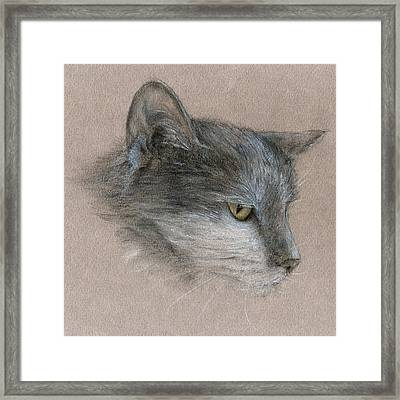 Murray The Cat Framed Print by Penny Collins
