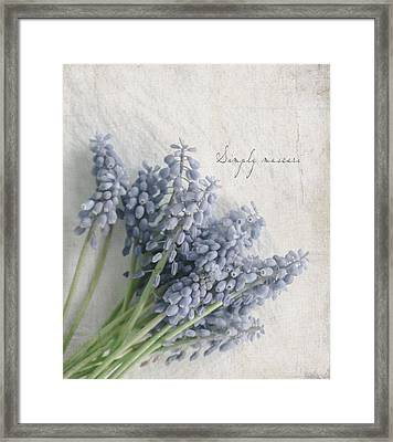 Muscari Framed Print by Beverly Cazzell
