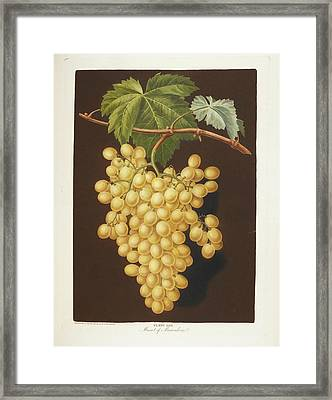 Muscat Framed Print by British Library