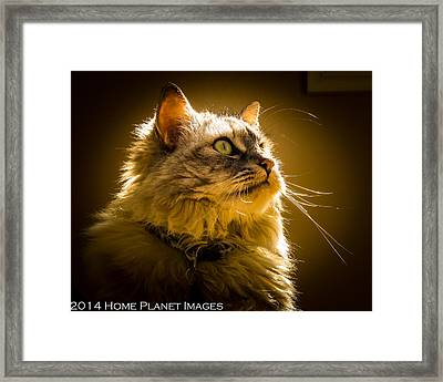 Muse In The Sun Framed Print by Janis Knight