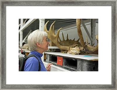 Museum Visitor With Moose Antlers Framed Print