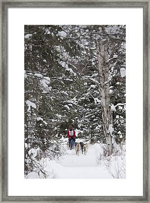 Musher In The Forest Framed Print by Tim Grams