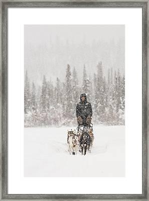 Mushing Through A Snow Storm Framed Print