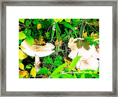 Mushroom Abstract # 3 Framed Print by Melinda Pettery