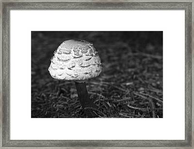 Mushroom Framed Print by Adam Romanowicz